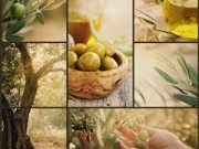 Nature series. Collage of olive orchard in harvest. Ripe olives, olive oil and olive harvest